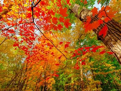Цветная осень – чёрный больше не в моде