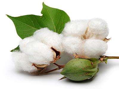 Бавовна - королева тканин: переваги і недоліки одягу з бавовни