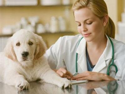 Чем порадовать ветеринаров в профессиональный праздник