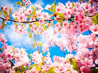 Одяг для весняних пригод